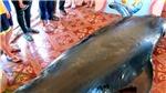 Cá voi nặng hơn một tấn dạt vào bờ biển Phú Yên với 3 vết thương
