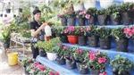 Phía sau những vườn hoa biệt thự ở Lào Cai