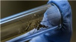 Mỹ phát hiện muỗi mang virus Zika
