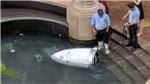 VIDEO: Robot cảnh sát ngã sấp mặt, 'chết đuối' dưới đài phun nước