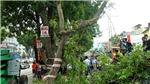 Toàn cảnh chặt hạ 1.289 cây xanh trên đường Phạm Văn Đồng đợt 1