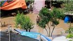 VIDEO Cận cảnh nước sông Hồng qua Hà Nội dâng cao ngập tới ngọn cây bãi Giữa