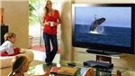 Khách sạn phải trả tiền tác quyền âm nhạc khi dùng ti vi - Đúng hay sai?