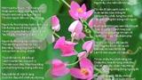 Hé mở tâm hồn người khơi cảm hứng bài thơ 'Hai sắc hoa ti-gôn'