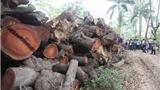 Vụ chặt cây xanh Hà Nội: Cách chức và giáng chức 3 cán bộ cấp phòng