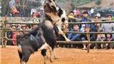 VIDEO: Tuyên Quang độc đáo lễ hội chọi dê