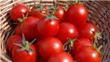 Từ quả cà chua đến chiếc ô tô