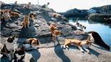 Loài mèo đã trở thành bá chủ 'thống trị' những vùng đất Nhật Bản