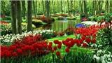 Hội hoa dễ có mấy người biết hoa...