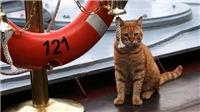 Chú mèo 'cưỡi' tàu chiến Nga tới Syria gây sốt mạng