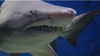 Cá mập bị 'thảm sát' la liệt ở Syria trong cuộc xung đột