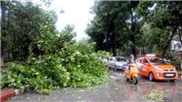 Bão số 2 đổ bộ Nghệ An, Hà Tĩnh: 4 tàu cá bị đánh chìm, nhiều cây to bị quật ngã