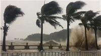 VIDEO: Siêu bão Hato nhấn chìm Trung Quốc trong biển nước