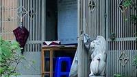 Bày sư tử ngoại lai mặt phố Hà Nội: Không thể là chuyện riêng tư