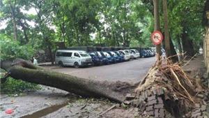 Hà Nội mất trên 1.000 cây xanh sau 1 tiếng mưa dông