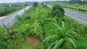 Hà Nội 'cắt' kinh phí về cây xanh: Tiếp tục tham khảo ý kiến nhân dân