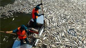 Vụ cá chết Hồ Tây: Công an vào cuộc điều tra nguyên nhân