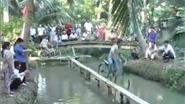 VIDEO: 'Văn hóa' đua xe trên cầu khỉ ở Bến Tre