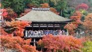 Chùm ảnh du lịch: Cố đô Kyoto vào Thu đẹp không sao tả xiết