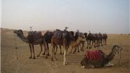 Chùm ảnh du lịch: Cưỡi lạc đà trên sa mạc Sahara