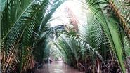 Chùm ảnh du lịch: Sông nước Tiền Giang