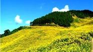 Video du lịch: Đà Lạt, ôi đẹp quá mùa hoa dã quỳ!