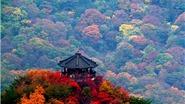Đi Hàn Quốc mùa Thu mà bỏ qua chỗ này thì TIẾC NUỐI vô cùng