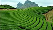 Mộc Châu & kinh nghiệm khám phá thảo nguyên xanh vạn người mê
