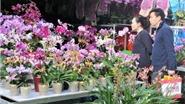 Người dân Hong Kong rộn ràng đón Tết