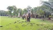Du lịch sinh thái vườn xoài ngày càng mới mẻ, hấp dẫn