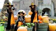 Hàng vạn trái bí được dùng để trang trí Halloween Sun World Ba Na Hills