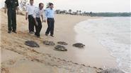 Kiến nghị khởi tố kẻ trộm 116 trứng Vích tại Côn Đảo