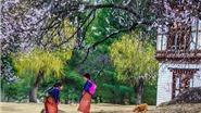 Tại sao ai cũng muốn đến Bhutan ít nhất một lần trong đời?