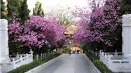 Côn Minh, thành phố mùa Xuân (phần 1)