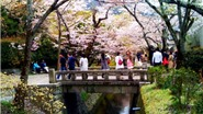 Kyoto & 10 điểm khám phá làm siêu lòng du khách dịp Thu Đông