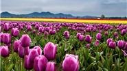 15 địa danh sở hữu khung cảnh mùa Xuân đẹp nhất thế giới