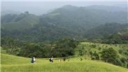 Tà Năng – Phan Dũng: Khám phá cung đường trekking đẹp nhất Việt Nam như thế nào?