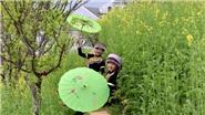 Ngẩn ngơ trước vườn cải rực vàng trên những triền núi Fansipan