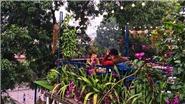 Uống cafe giữa 'vườn địa đàng' đẹp từng milimet giữa trung tâm Hà Nội