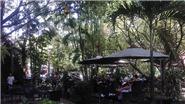 Cafe Thủy Trúc, xanh mướt một 'miền quê' giữa lòng phố thị