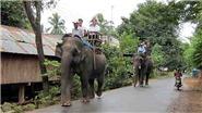 Chuyển đổi mô hình du lịch 'cưỡi voi' sang 'ngắm voi'