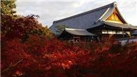Kinh nghiệm du lịch Nhật Bản tự túc. Khám phá Kyoto 3 ngày như thế nào?